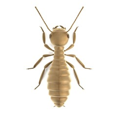 realistic 3d render of termite worker