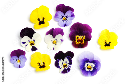 Plexiglas Pansies violets