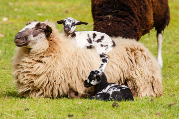 Trotse moeder met kind op de rug