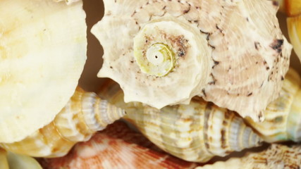 Loopable background of sea cockleshells.
