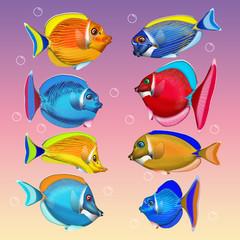 bunte Korallenfische, fantasie