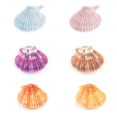 Colorful set  of Scallop seashell isolated on white background