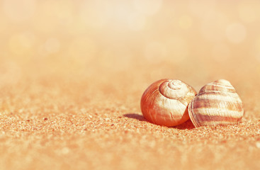 Seashells on the sand