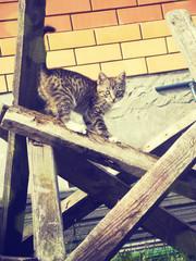 Retro Kitten Photo