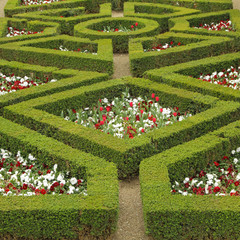 maze flowerbed  in Boboli Gardens in Florence,Unesco site