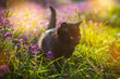 Little black kitten sitting in flowers