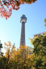横浜マリンタワーと紅葉