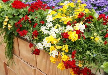 Bunte Balkonblumen auf Mauer