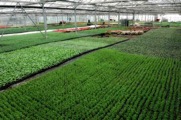 horticulteur