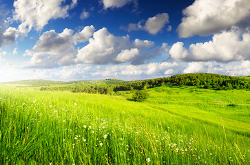 Grassland in summer time.