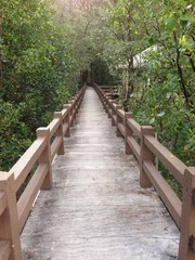 Mangrove forest and corridors in the park.