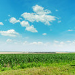 green maize field and clouds in blue sky