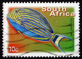 Postage stamp South Africa 2000 Blue-banded Surgeonfish, Marine
