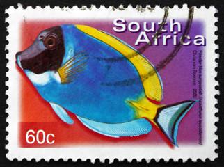 Postage stamp South Africa 2000 Powder-blue Surgeonfish, Marine