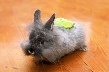 funny rabbit with salad on the back