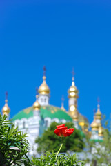 Tulip on the background of Refectory Church, Kyiv Pechersk Lavra