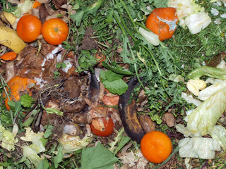 Kitchen and garden waste on a compost heap left to decompose.