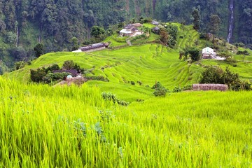 rice field and village in Annapurna nountains - Nepal