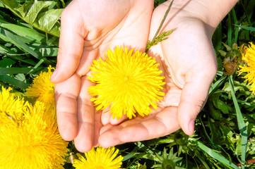 Hände halten eine Blume