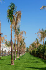Palmeto panorama