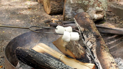 Marshmallows Roasting on a Campfire in the Afternoon (Slow Pan)