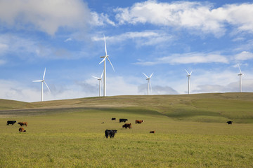 Wind Farm in Washington State
