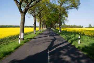 Bundesstrasse im Frühling, Deutschland
