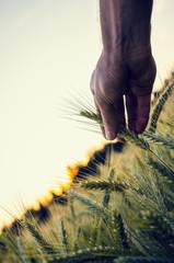 Problematic of GMO