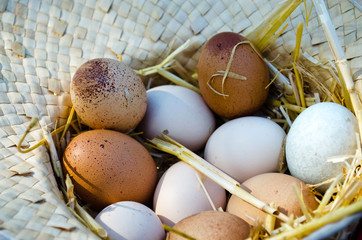 Fresh farm eggs in a wicker hat
