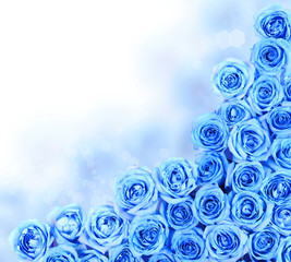 Turquoise Roses over white background. Border