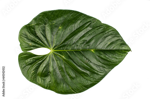 Staande foto Palm boom jungle leaf white background