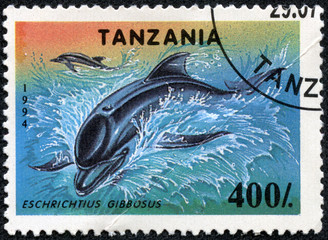 stamps printed in Tanzania shows a Eschrichtius Gibbosus