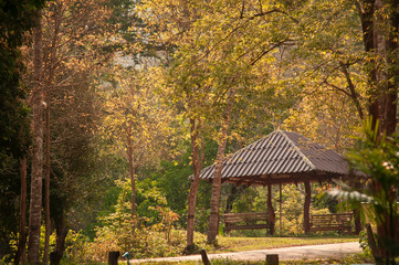 Pavilion in forest