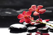 Branch red orchid flower and black stones