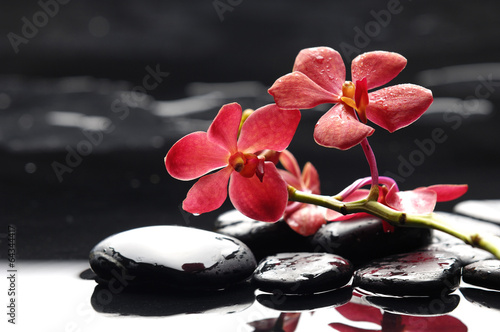 Poster Spa Branch red orchid flower and black stones