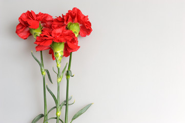 Three red carnations on gray