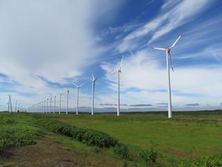 草原と風車