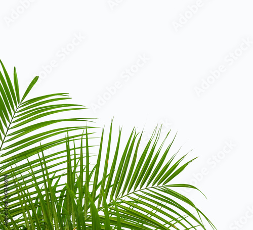 Papiers peints Palmier green palm leaves isolated on white background, clipping path in