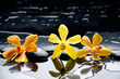 spa concept –three orchid with stones and wet background