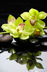 Branch green orchid with zen stones reflection