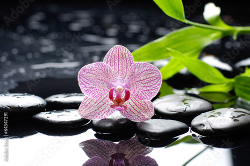Poster Spa Macro of orchid and stones with green bamboo leaf