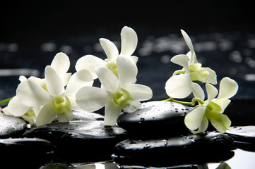 Branch white orchid with zen stones