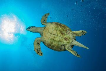 Bottom of a sea turtle