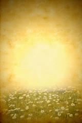 Daisies spring meadow grunge background
