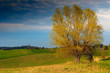 Obrazy na płótnie, fototapety, zdjęcia, fotoobrazy drukowane : Piękno Wiosennych Pół  Warmii