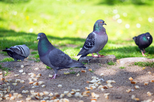 Pigeons on the park oliwski, Poland