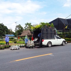 gardener transport flower by pick up