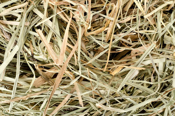 Background of  meadow hay