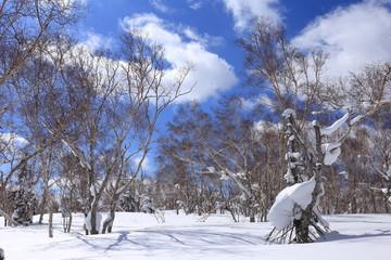 Winter forest in Mt. Teine, Sapporo, Japan