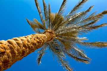 Palma in the sky